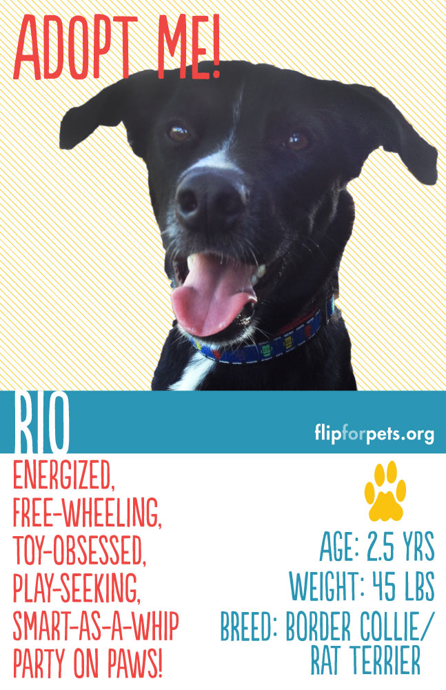 Flip for Pets Adoption Poster